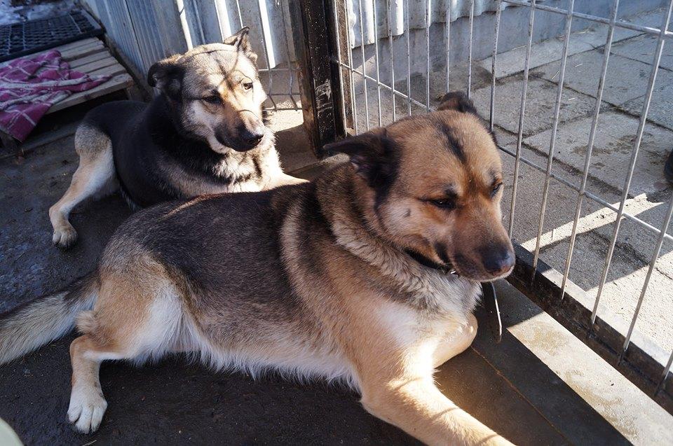psy szukają domu