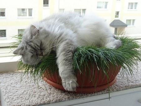 koty niewychodzące