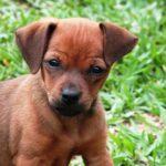 Jak wychować psa?