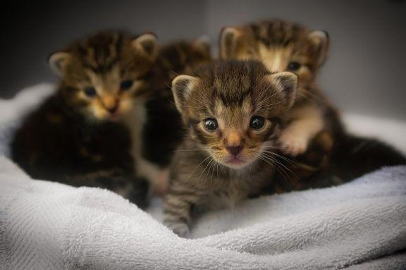 kastracja kota