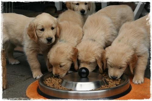 jaką karmę dla psa wybrać