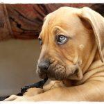 Psia mowa. Sygnały wysyłane przezpsa.