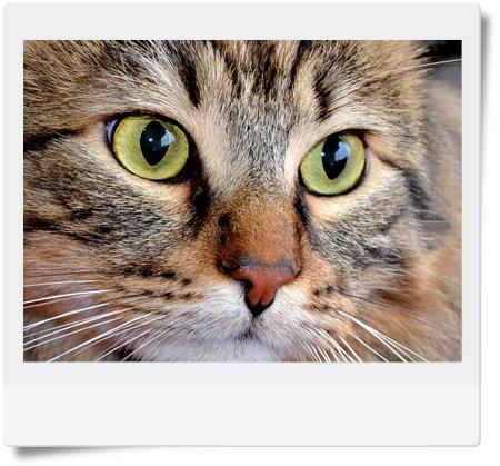 koci charakter okiem kociego behawiorysty