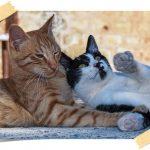 Behawiorysta koci radzi: Czymójkot potrzebuje towarzysza?