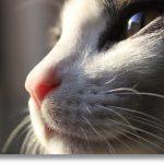 Pięć mitów natemat kotów
