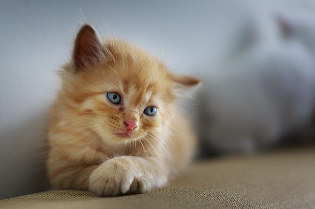 Życie społeczne kotów